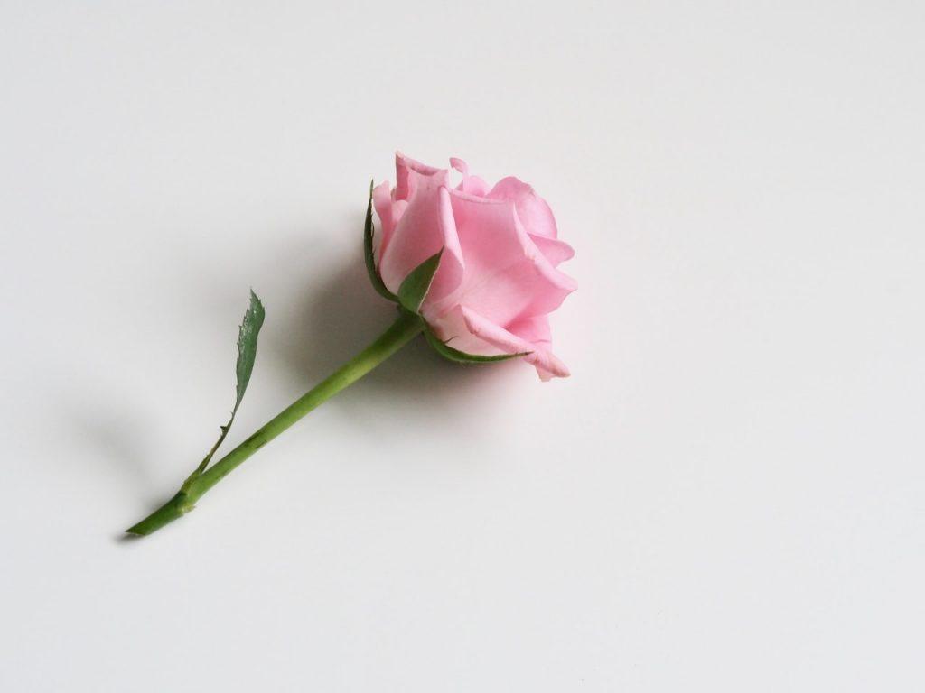 antiage lenitiva rosa damascena